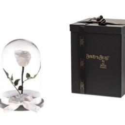 Beauty And The Beast Με Λευκό Τριαντάφυλλο και φωτάκια LED
