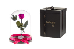 Beauty And The Beast XL Με Φούξια Τριαντάφυλλο και φωτάκια LED