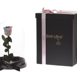 Beauty And The Beast XL With Rainbow Rose And LED Lights Included