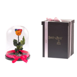 Beauty & The Beast Με Κόκκινο Rainbow Τριαντάφυλλο Σε Γυάλα & LED Φωτάκια