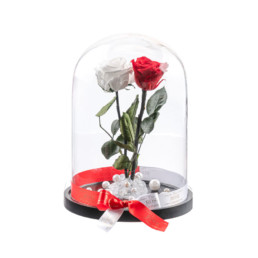 Beauty And The Beast XXL White & Red Rose Box Included
