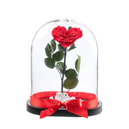 Beauty And The Beast XXL Heart Shaped Rose Box Included